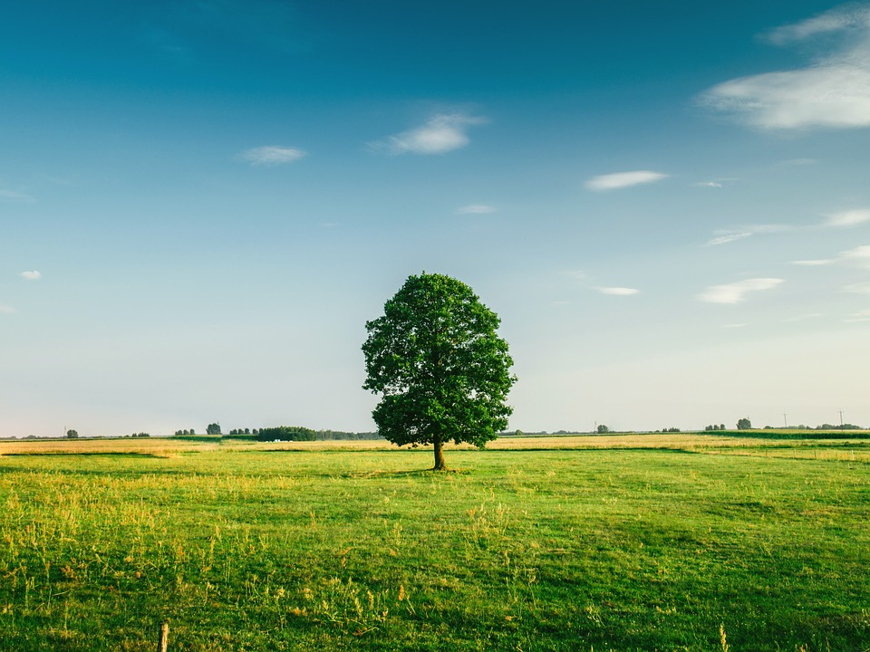 Terrain isolé, terrain loti : quelles différences ?